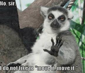 just a lemur misunderstanding