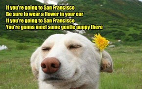 If you're going to San Francisco  Be sure to wear a flower in your ear  If you're going to San Francisco  You're gonna meet some gentle puppy there
