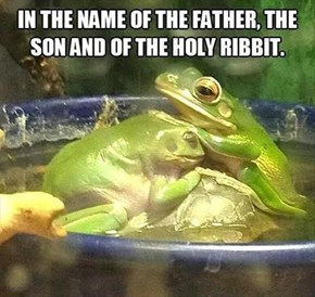 The Cross of a Frog