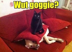 No goggies here.