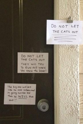 Sneaky Sneaky Cat