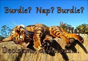 Burdie?  Nap? Burdie? Nap?  Decisions, decisions....