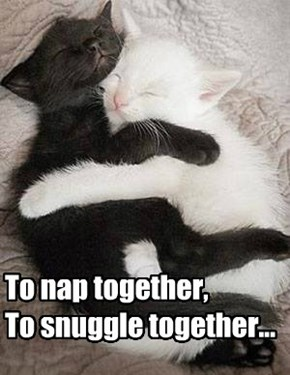 To nap together,  To snuggle together...