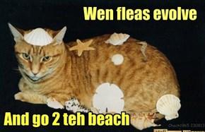 Wen fleas evolve
