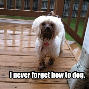 I never forget how to dog.