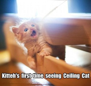 Kitteh's  first  time  seeing  Ceiling  Cat