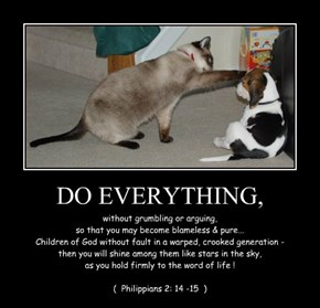 DO EVERYTHING,