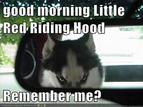 good morning Little Red Riding Hood  Remember me?