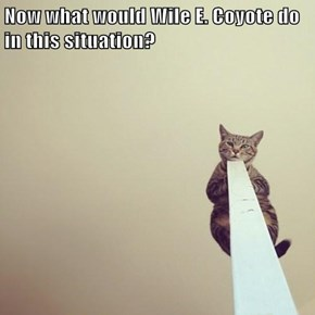 Now what would Wile E. Coyote do in this situation?