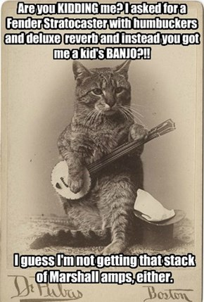 Humans just don't understand a kitty's musical needs.