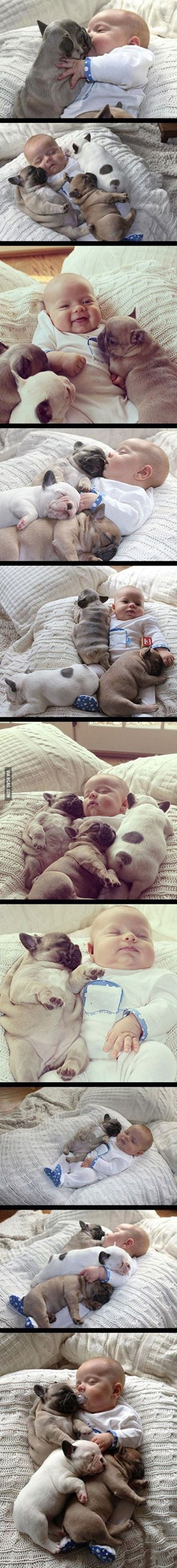 Babies and Puppies Kissing...Need I Say More?