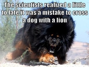 The scientists realized a little to late it was a mistake to cross a dog with a lion