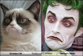 Grumpy Cat Totally Looks Like Harley's Joker
