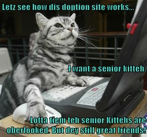 Letz see how dis doption site works... I want a senior kitteh. Lotta tiem teh senior Kittehs are oberlooked. But dey still great friends!