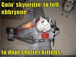 Goin' skywritin' to tell ebbryone  to dopt shelter kittehs!