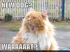 NEW DOG?  WAAAAAAT?