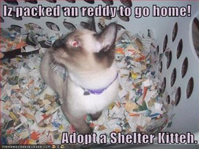 Iz packed an reddy to go home!  Adopt a Shelter Kitteh.