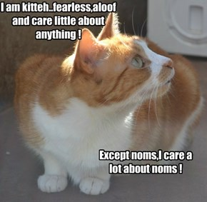 I am kitteh..fearless,aloof and care little about anything !