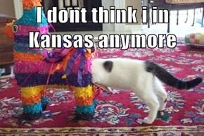 I dont think i in Kansas anymore