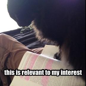 no moar studies...only pets!