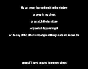 My cat never learned to sit in the window  or poop in my shoes  or scratch the furniture  or yowl all day and night  or  do any of the other stereotypical things cats are known for        guess I'll have to poop in my own shoes