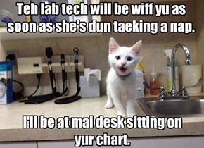 If doctor offices were run by cats.