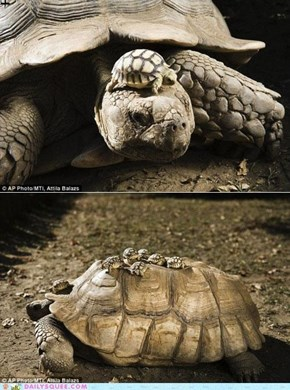 Adorable Turtle Mom and Babies