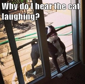 Why do I hear the cat laughing?