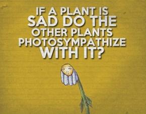 Plant Empathy