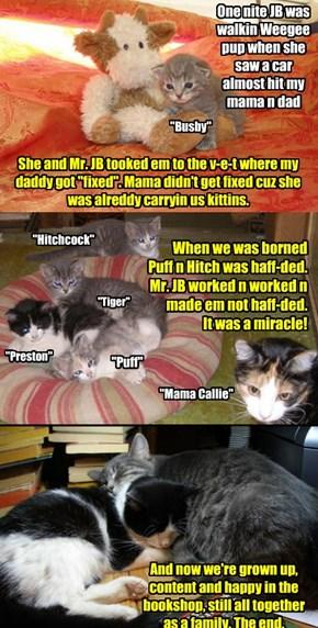 JennyBookseller's kitteh reskew story