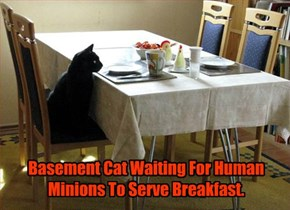 Basement Cat Waiting For Human Minions To Serve Breakfast.