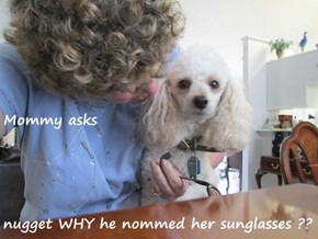Mommy asks nugget WHY he nommed her sunglasses ??