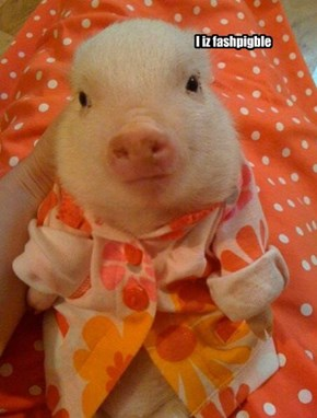 fashionable piggy!!