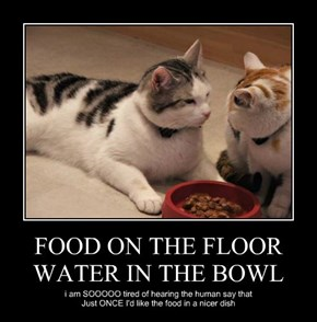 FOOD ON THE FLOOR WATER IN THE BOWL