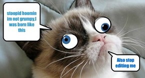 Grumpy cat not grumpy