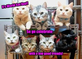 Let teh pawty begin!