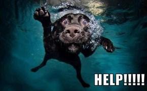 HELP!!!!!