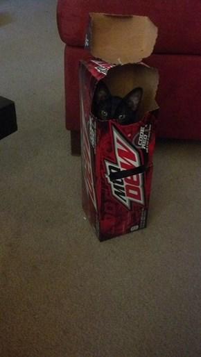 Moya is a caffeinated kitten
