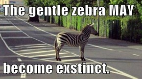 The gentle zebra MAY  become exstinct.