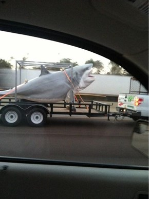 Seeing Sharks Everywhere Sharkweek
