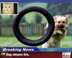 Breaking News - Dog misses tire.
