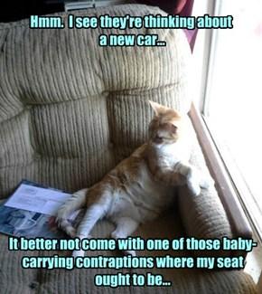 Suspicious cat is ...suspicious