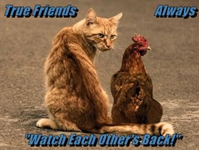 "True Friends                              Always  ""Watch Each Other's Back!"""