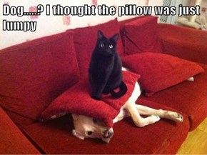 Dog.....? I thought the pillow was just lumpy