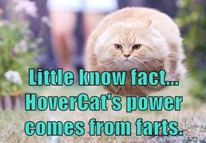 Little know fact... HoverCat's power comes from farts.