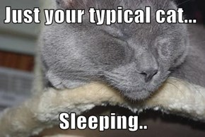 Just your typical cat...  Sleeping..