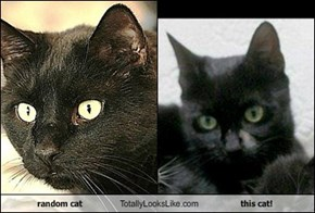 random cat Totally Looks Like this cat!