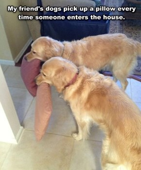 Souther Hospitality: Canine Edition