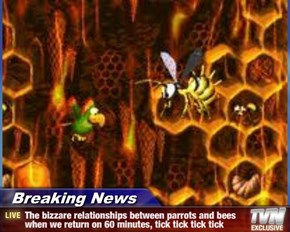 Breaking News - The bizzare relationships between parrots and bees when we return on 60 minutes, tick tick tick tick