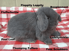 The Anatomy of a Fluffy Bunny